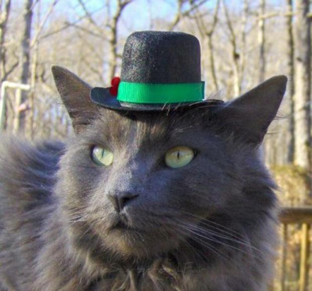 Artista americana se especializou em chapéus para gatos (Foto: Divulgação/Amélie Segarceanu)