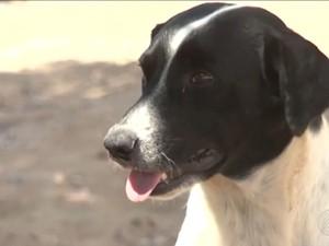 Cinomose atinge principalmente filhotes de cachorros (Foto: Reprodução/ TV Santa Cruz)