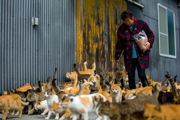 Mulher alimenta dezenas de gatos na ilha de Aoshima (Foto: Thomas Peter/Reuters)