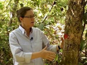 Beatriz Marimon conta que análise das árvores pode prever futuro das espécies (Foto: Reprodução/Unemat)