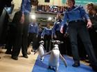 SeaWorld lança ações e leva pinguins à bolsa de valores de NY