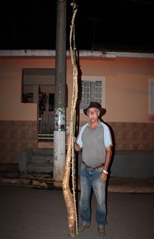 'Mandioca gigante' surpreende comerciante em Lagoinha. (Foto: reprodução/Portal Lagoinha)
