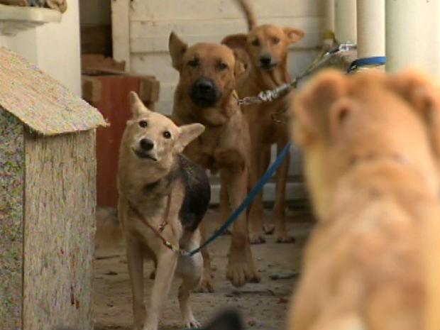Adestrador é multado por maus-tratos a animais em Sorocaba (Foto: Reprodução/TV TEM)