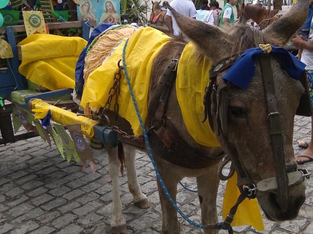 Animais foram enfeitados para a 'carroceata' em Campina Grande   (Foto: Rafael Melo/G1)