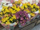 Flores estão mais caras para o Dia de Finados em Campos, RJ, diz Procon