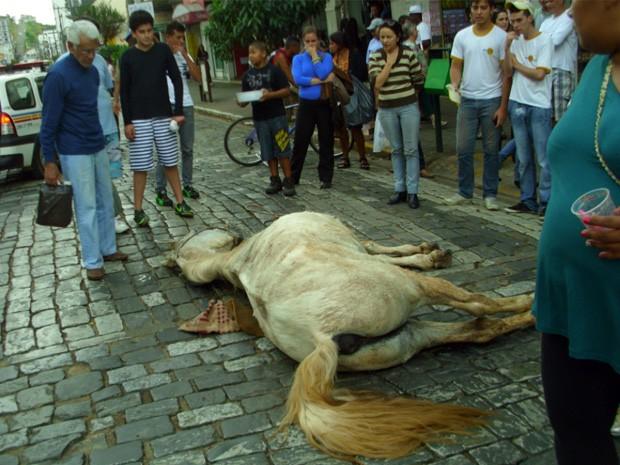 Exaustão pode ter motivado morte de cavalo em São Lourenço, MG (Foto: Rogério Brasil / Opopular.net)