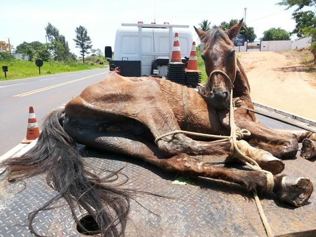 Cavalo precisou ser retirado do acostamento com a ajuda de um guincho. rio preto (Foto: Divulgação/Polícia Ambiental)