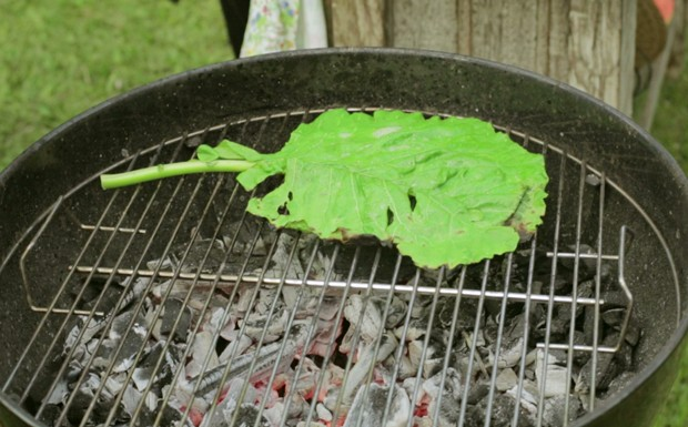 Chips de couve (Foto: Divulgao/GNT)