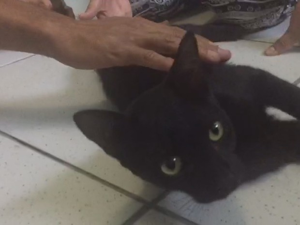 Pretinho foi adotado pela família há um ano, ao ser resgatado de rua (Foto: Maico Jean/ Reprodução)