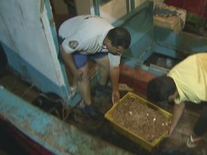 Parte do camarão apreendido pela Policia Ambiental de Itanhaém (Foto: Reprodução/TV Tribuna)