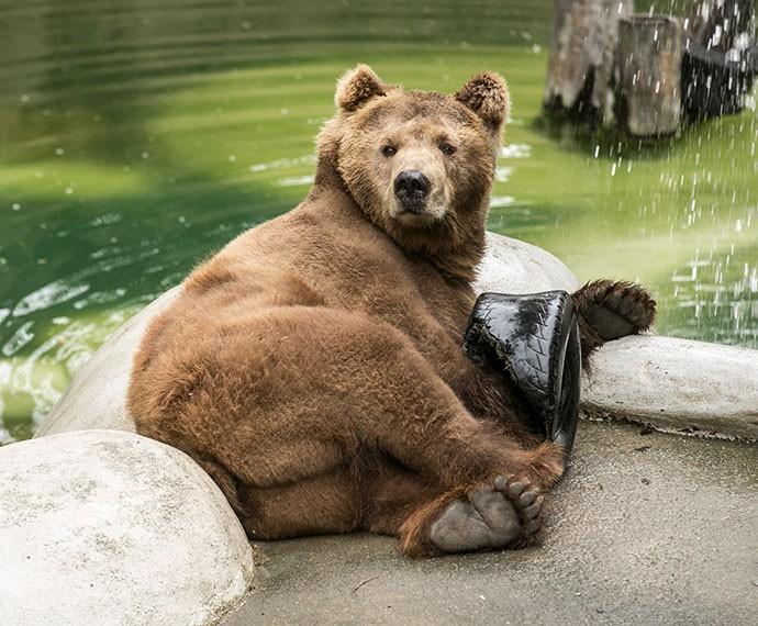 Urso é o foco da atenção dos visitantes do zoo (Foto: Inácio Moraes/Gshow)