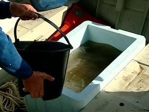 Os peixes foram retirados do rio antes da chegada da lama (Foto: Reprodução/ TV Gazeta)