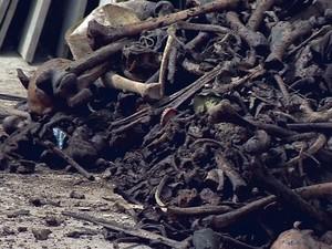 Retirada de ossada de cemitério de São João del Rei para incineração (Foto: Reprodução/TV Integração)