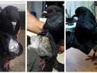 Veja pombo e até barriga falsa usados para transportar drogas
