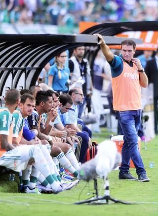 Palmeiras x Corinthians Cuca (Foto: Marcos Ribolli )