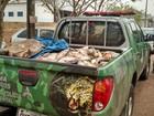 Polícia apreende 548 kg de pescado em estrada vicinal no sul do Tocantins