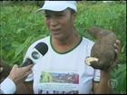 Chuva em boa quantidade garante a safra da mandioca na Bahia