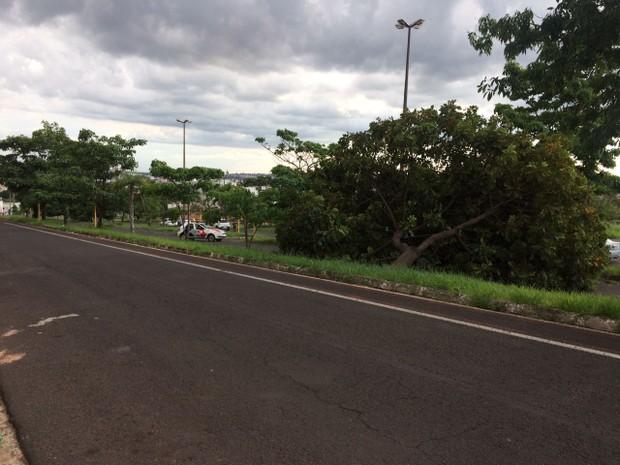 Ávore caiu em avenida de Bauru (Foto: Frederico Juncal/Arquivo Pessoal)