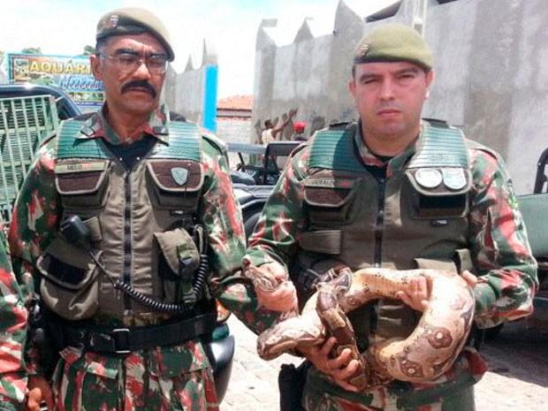 Policiais de proteção ambiental capturaram a cobra dentro de uma oficina em Parnamirim (Foto: Divulgação/Polícia Militar do RN)