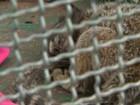 Medo da febre amarela pode ser causa de ataques a macacos em Rio Preto