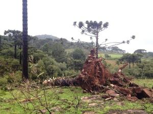 Meteorologista Leandro Puchalski confirmou que um tornado atingiu São Joaquim (Foto: Larissa Vier/RBS TV)