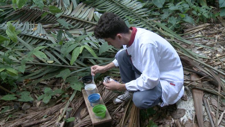 Pesquisadores do INPA, buscam novo combate ao mosquido da dengue (Foto: Amazônia Rural)
