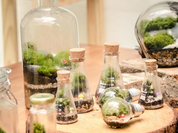mini jardim de vidro:Jardim que precisa de 120 ml de água ao ano é alternativa diante de