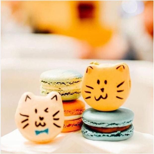 Cat café tem cardápio de macarons e bichanos para adoção (Foto: divulgação)