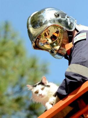 Gata estava há quatro dias presa na árvore (Foto: Divulgação/Zezinho Santos)