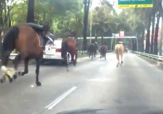 Tropa de cavalos foi filmada correndo por vias da capital mexicana  (Foto: Reprodução/YouTube/2012mx)