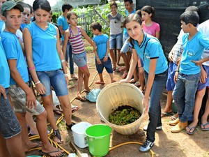Objetivo é evitar o uso de agrotóxicos na produção agrícola (Foto: Fernanda Bonilha/G1)