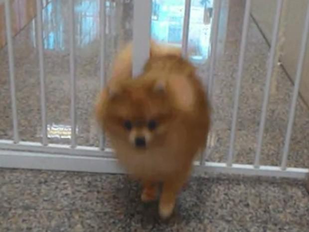 Lulu cruzou pequeno espaço entre duas barras de ferro de portão e virou hit (Foto: Reprodução/Imgur/HollyAldous )