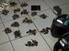 Veículos roubados são encontrados em desmanche em Itatiba