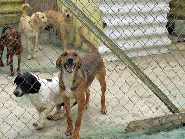 Cães abandonados são tratados com todo cuidado pelas ONGs enquanto aguardam a adoção (Foto: Marcelo Mora/G1)