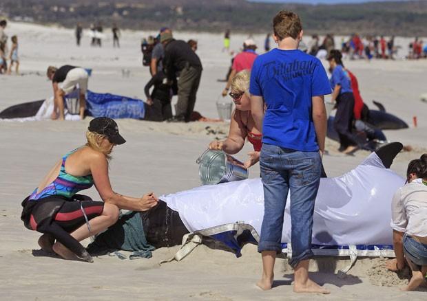 Polícia, equipes de resgate e voluntários estão tentando salvar as baleias sobreviventes (Foto: Schalk van Zuydam/AP)