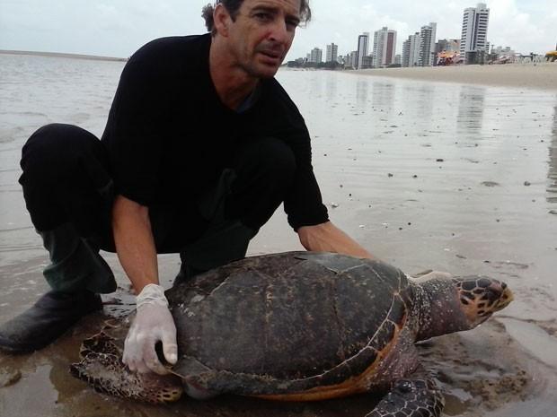 Tartaruga pente estava morta há um dia com características de afogamento (Foto: Adriano Artoni/ Acervo pessoal)