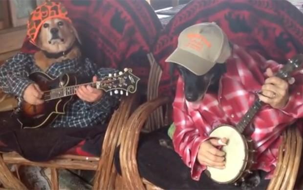 Cães Molly e Smoke aparecem tocando banjo em vídeo (Foto: Reprodução/YouTube/Cameron Owens)