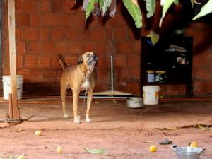 Criança é ferida no olho e vizinhos dizem que ela foi atacada por cão (Foto: Caroline Merlo/ G1 MS)