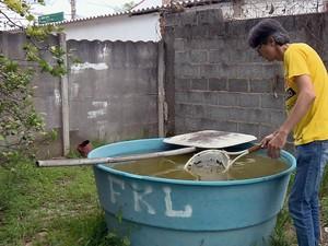Peixe é usado como alternativa no combate à dengue em Alfenas (MG) (Foto: Reprodução EPTV)
