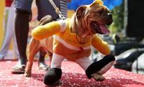 'Blocão' agita foliões e seus  cães no Rio; FOTOS (REUTERS/Sergio Moraes)