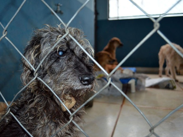 Animais morrem de frio no CCZ de Araraquara (Foto: Manoela Marques/G1)