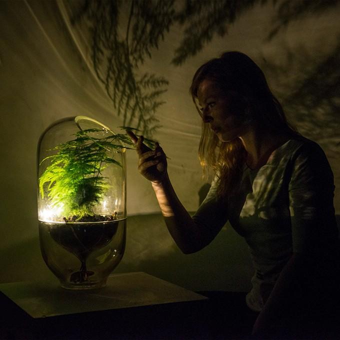 Esta lâmpada acende com a energia produzida por plantas (Foto: Divulgação)