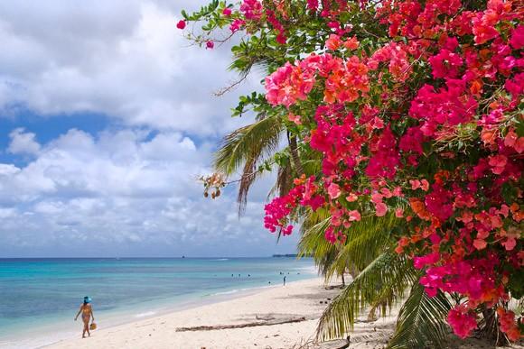 Flores de uma árvore na praia Fitts, no Caribe  (Foto: . © Haroldo Castro/Época)