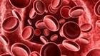 Origem e evolução das células é relevante para o estudo da genética (Reprodução)