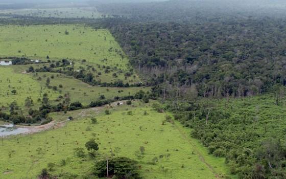 Desmatamento da Amazônia (Foto: Arquivo/MMA)