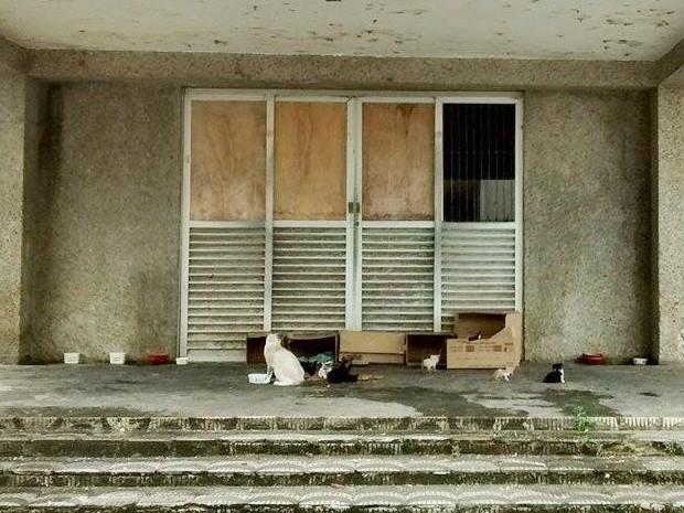 Muitos gatos são abandonados na porta do hospital abandonado, em Bayeux, na Grande João Pessoa (Foto: Vânia Rodrigues/Arquivo Pessoal)