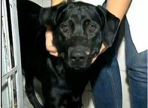 Cachorro que levou tiro no focinho (Foto: Reprodução/ TV Globo)