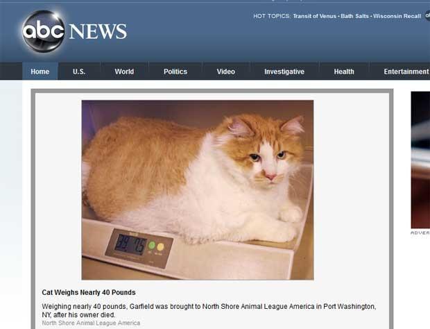 'Garfield' está com 18 quilos e passará por regime. (Foto: Reprodução/ABC News)