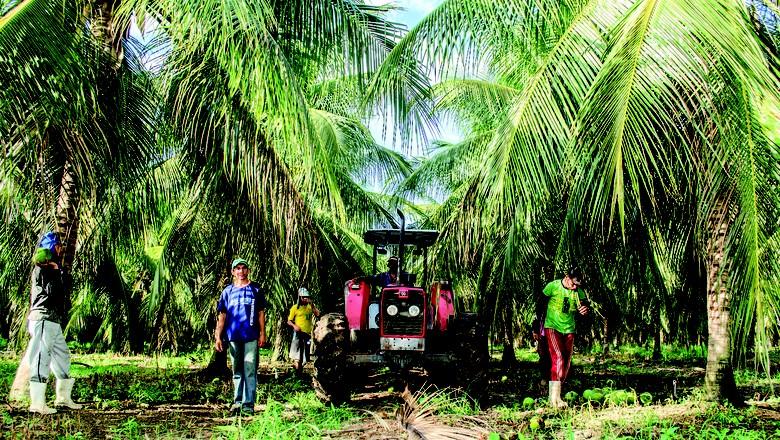 Eficácia: troca de equipamentos de irrigação e consultoria do Sebrae resultaram numa redução de 25% do custo de produção de Medeiros (Foto: Clarissa Costa/Ed. Globo)
