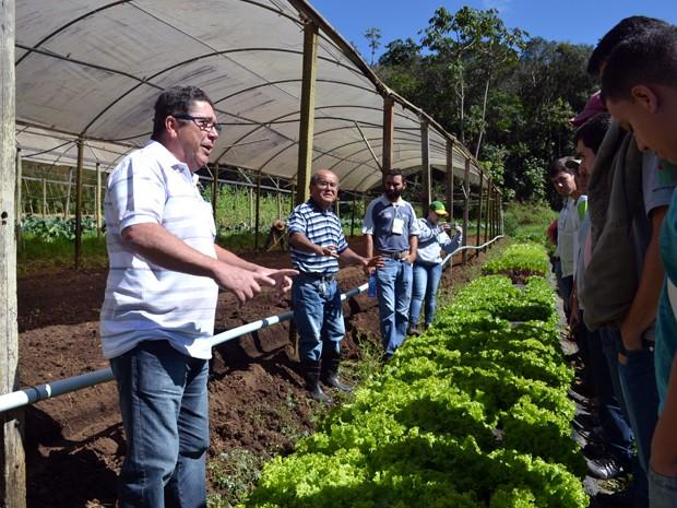 Além de morangos, sítio em Cambuí produz hortaliças com método orgânico de plantio (Foto: Daniela Ayres/ G1)